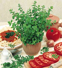 Uses of Origanum