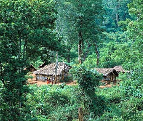 forest in india wikipedia