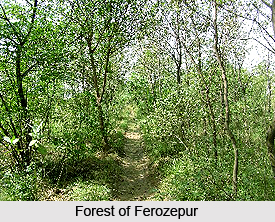 Forests of Ferozepur, Punjab