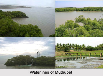 Muthupet, Tiruvarur District, Tamil Nadu