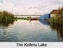 Kolleru Lake, Andhra Pradesh