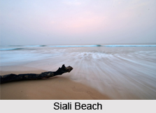 Siali Beach, Jagatsinghpur District, Odisha