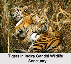 Indira Gandhi Wildlife Sanctuary and National Park, Western Ghats, Tamil Nadu