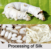 Silk, Indian Fibre