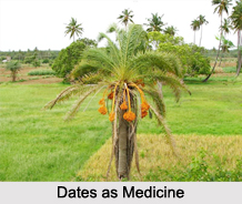 Use of Dates as Medicines, Classification of Medicine