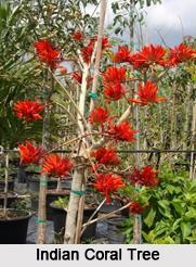 Deciduous Trees of India