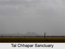 Wildlife Sanctuaries of Rajasthan