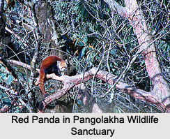 sikkim wildlife and biodiversity Research on fauna (especially mammals) and flora (especially angiosperms)  ( sikkim, north bengal, including darjeeling) and bhutan in the.