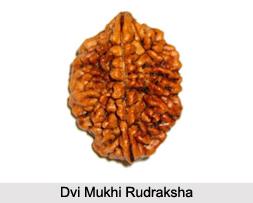 Dvi Mukhi Rudraksha