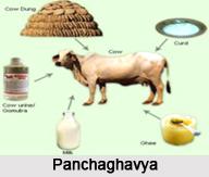 Panchagavya, Ayurveda