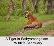 Wildlife Sanctuaries of Tamil Nadu