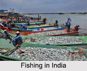 Fishery in India