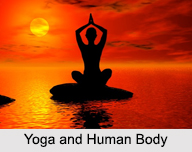 Yoga And Human Body