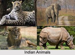 Indian Natural History