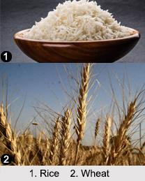 Indian Food Crops, Indian Vegetation