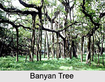 Trees In Indian Mythology and Folklore