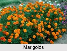 Indian Plants