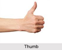Thumb, Palmistry