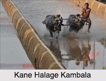 Kambala, Buffalo Race, Karnataka
