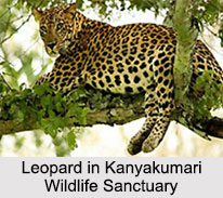 Wildlife Sanctuaries of South India