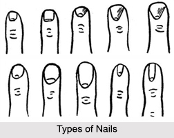 Nails, Palmistry