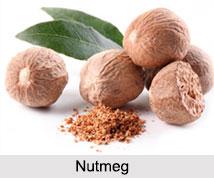 Nutmeg, Indian Spice