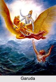 Garuda, Animal Deities, Indian Mythology