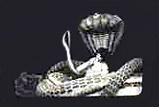 Přehledová literatura o indickém filmu KaliyaMardan_4059