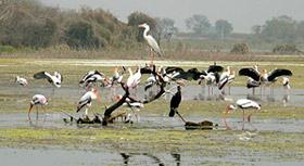 Manjira River