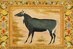 Indian Natural History in Mughal period