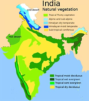 VEGETATION PATTERNS IN THE GRASSLAND AND SAVANNA AREAS OF