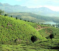 City of Kerala - Munnar