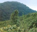 Nokrek Peak