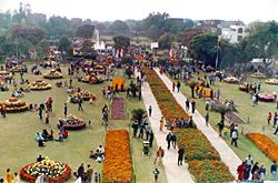 Chandigarh rose Festival