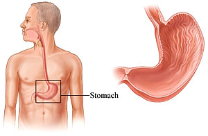 Can The Human Stomach Digest Blood