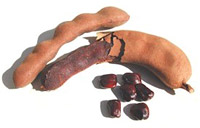 Tamarind Fruits and Seeds