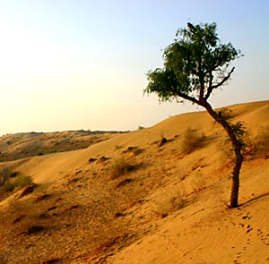 Kathiawar-Gir Dry Deciduous Forests in India