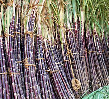 http://www.indianetzone.com/photos_gallery/31/Sugarcane_21985.jpg