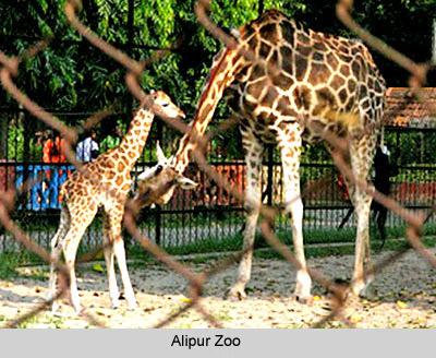 Alipur Zoo - Alipur , Kolkata