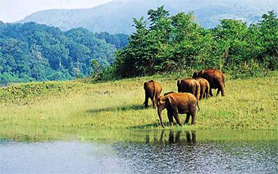 Aralam wild life sanctuary - Kannur, Kerala
