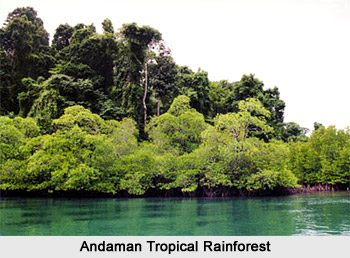 Andaman Tropical Rain Forest