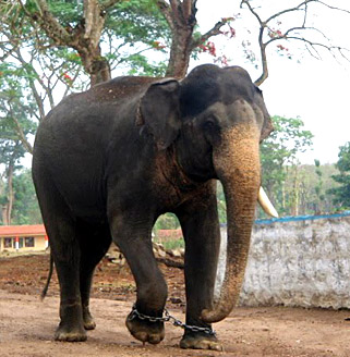 Dubbare Elephant camp