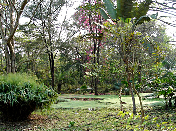 Indian Botanical Garden, Shivpur, Howrah, West Bengal
