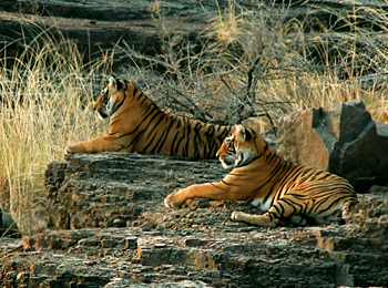 History of Indian Wildlife