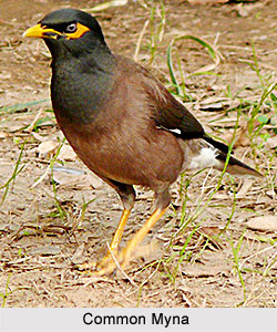 Images of List Of Indian Birds With Names - industrious info
