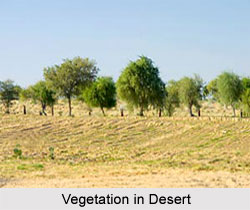 Natural Vegetation in India