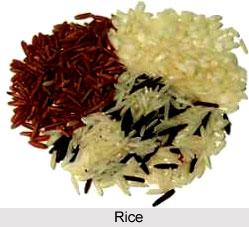 Rice, Indian Food crop