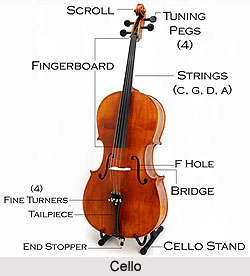 Cello, String Instrument