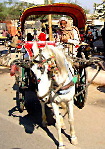 Horse carriages in the Indian villages is referred as Tonga, and buggies