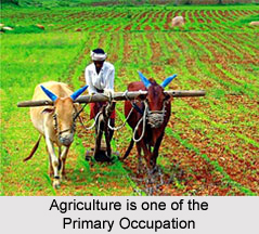 Occupation in Indian Villages